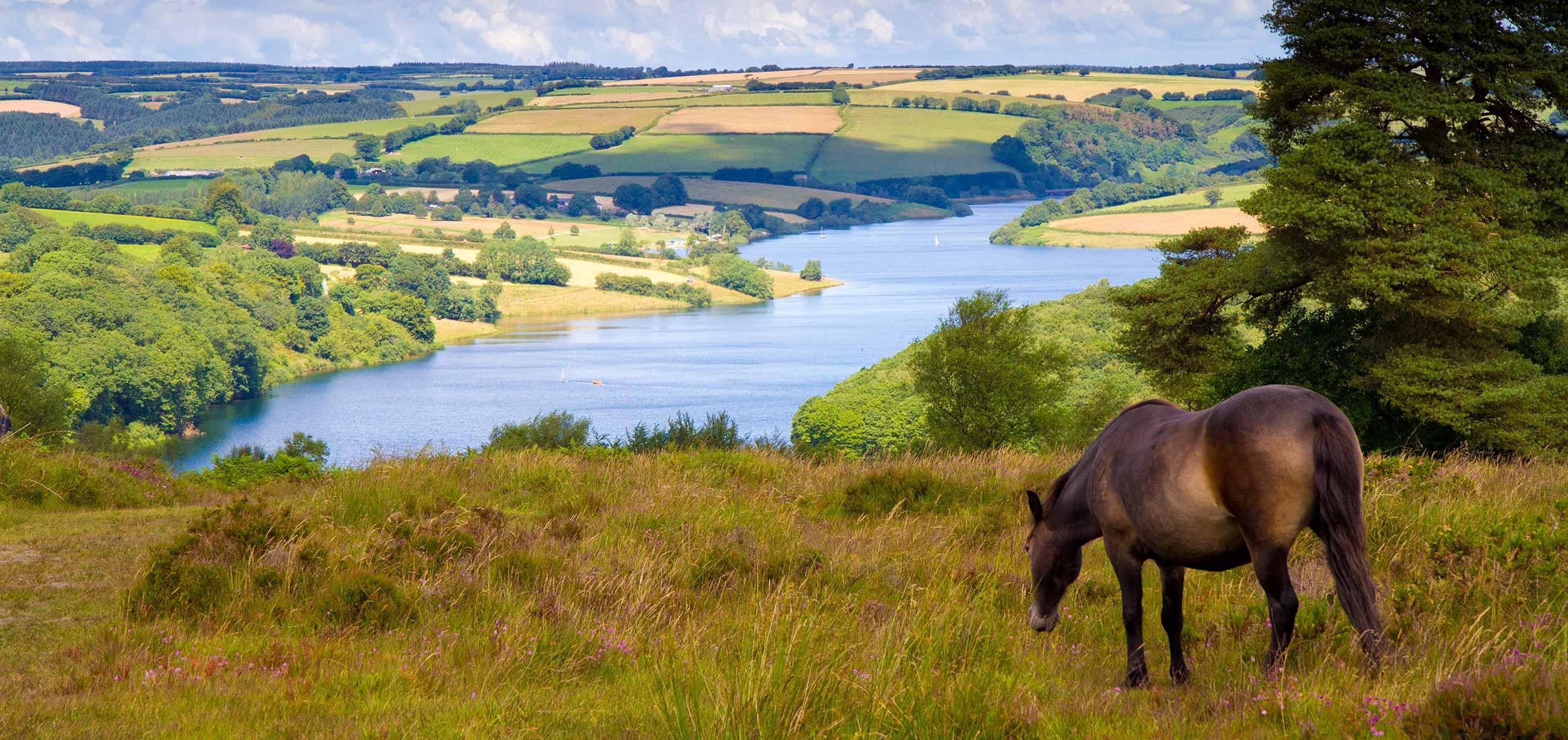 horse_landscape_109617683