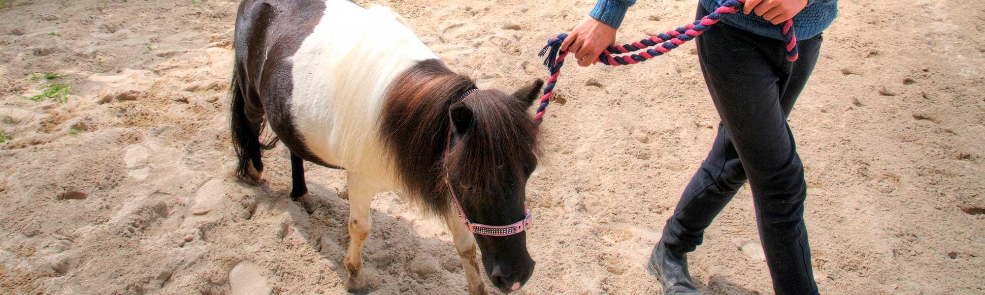 rural_equine_shetland