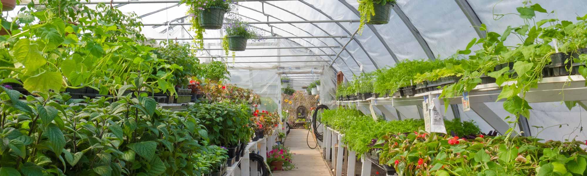 rural_garden_centres_2x6_79064623